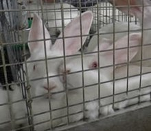 Take action for rabbits