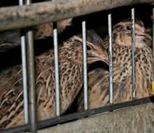Take action for quail