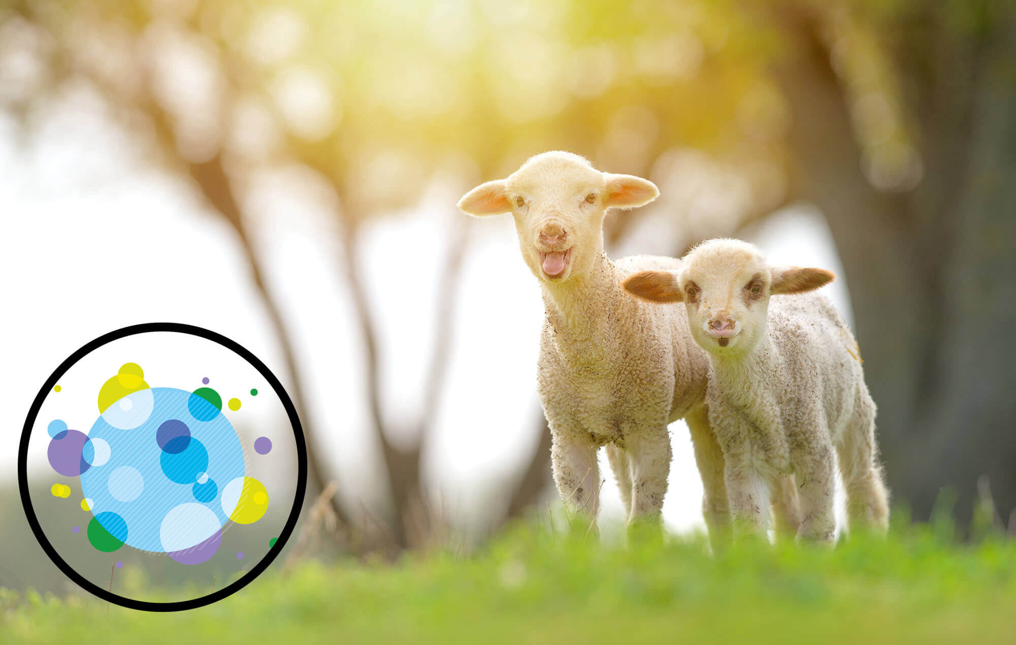 Help end factory farming