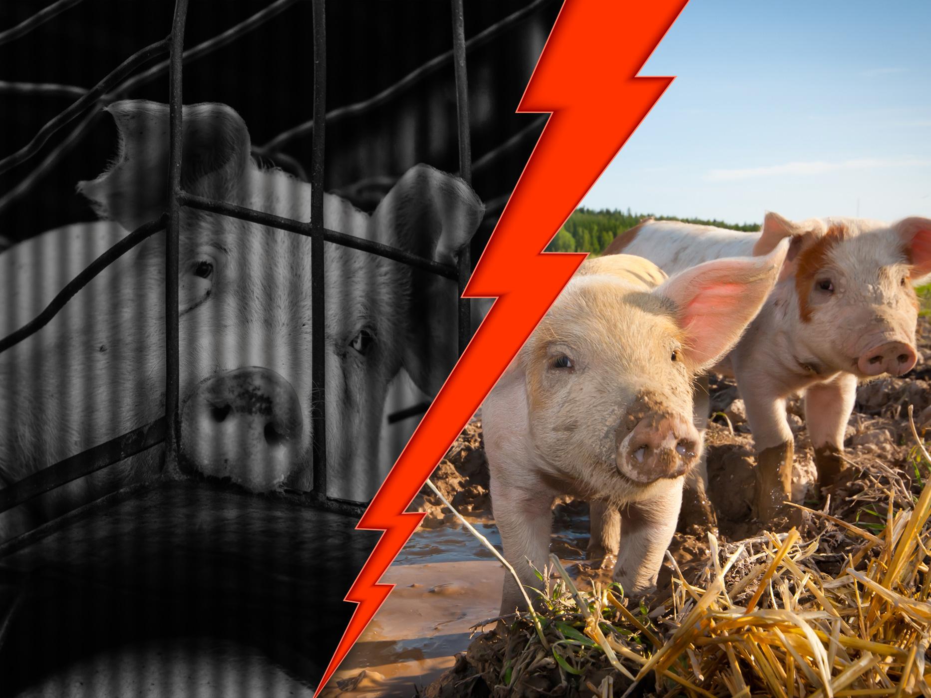 Réinventons le monde de demain pour les animaux