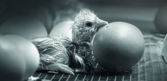 Chick next to egg on wire base
