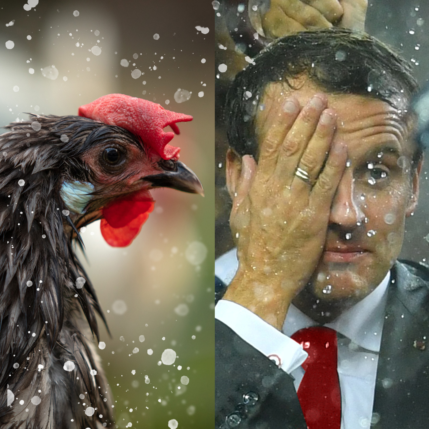 Macron, poule mouillée ?